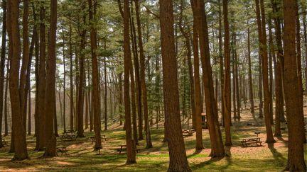 forest Trending